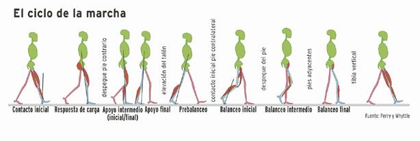 ciclo de marcha